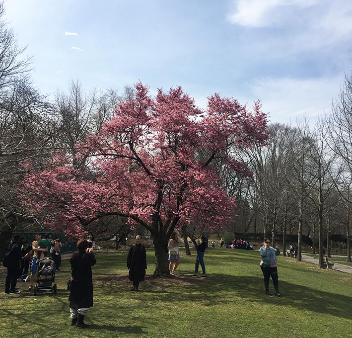 Giardini botanici Brooklyn